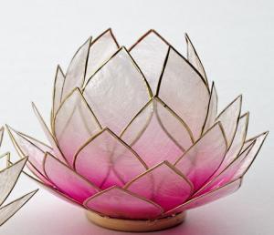 Regnbågsvävar Stor lotusblomma för värmeljus, rosa