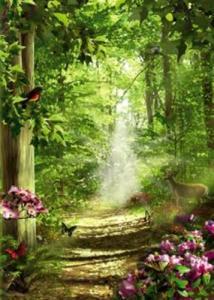 Regnbågsvävar Vykort, Forest of Life