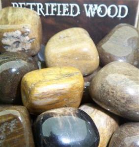 Lo Scarabeo Förstenat Trä - Petrified Wood